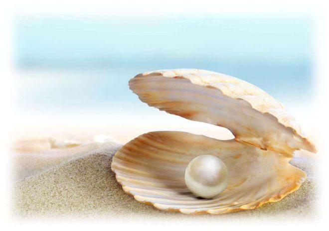 жемчужина в ракушке на берегу моря